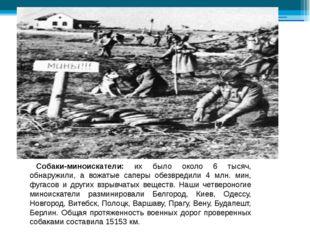 Собаки-миноискатели: их было около 6 тысяч, обнаружили, а вожатые саперы обе