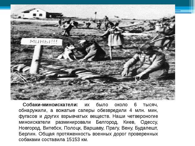 Собаки-миноискатели: их было около 6 тысяч, обнаружили, а вожатые саперы обе...