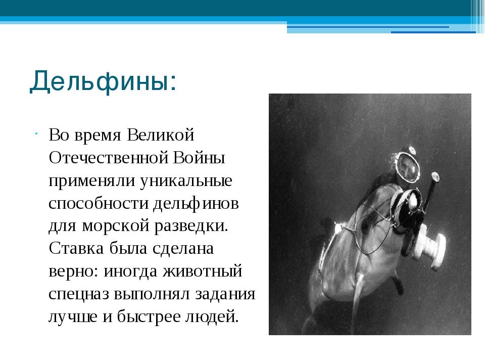 Дельфины: Во время Великой Отечественной Войны применяли уникальные способнос...