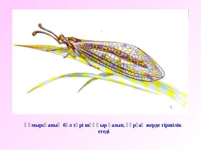 Құмырсқаның бұл түрі шұңқыр қазып, құрғақ жерде тіршілік етеді