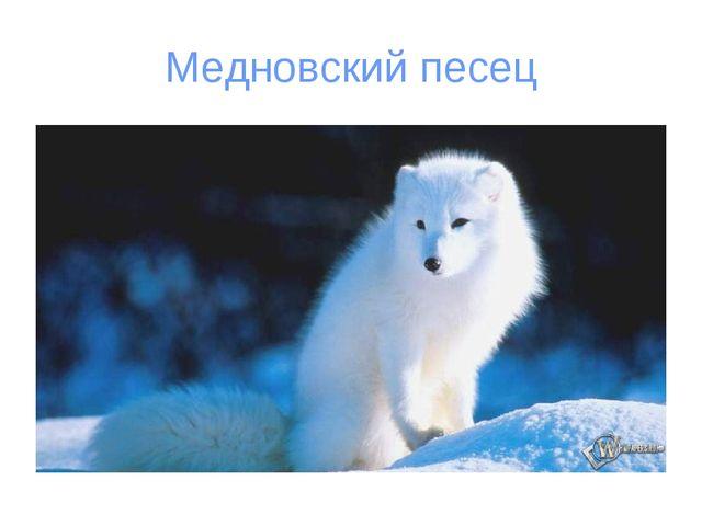 Медновский песец