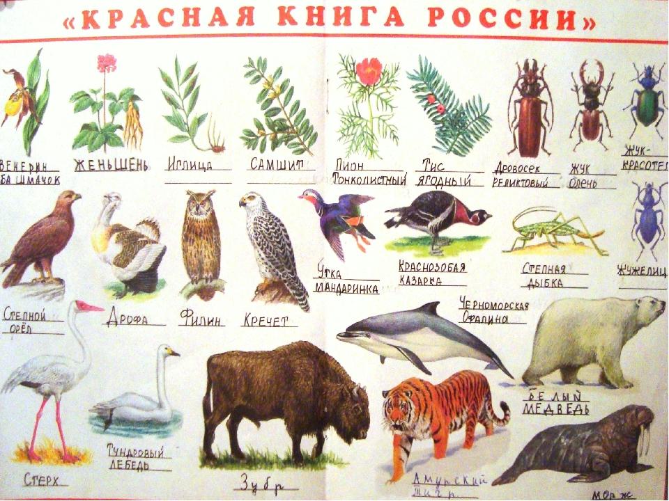 Красная книга с животными своими руками 45
