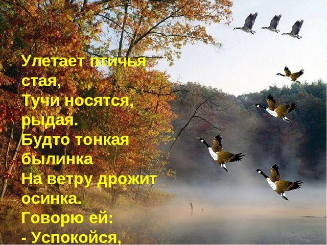 Улетает птичья стая, Тучи носятся, рыдая. Будто тонкая былинка На ветру дрожи...