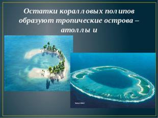 Остатки коралловых полипов образуют тропические острова – атоллы и