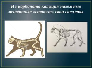Из карбоната кальция наземные животные «строят» свои скелеты