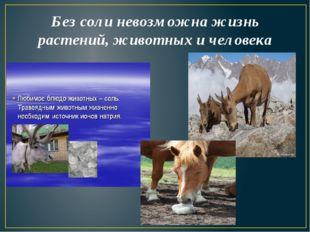 Без соли невозможна жизнь растений, животных и человека