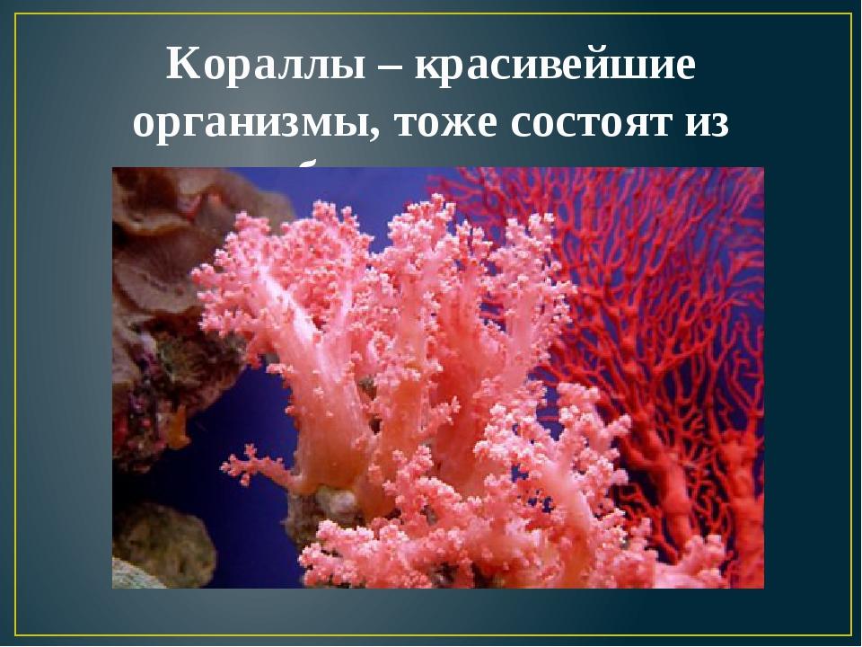 Кораллы – красивейшие организмы, тоже состоят из карбоната кальция.