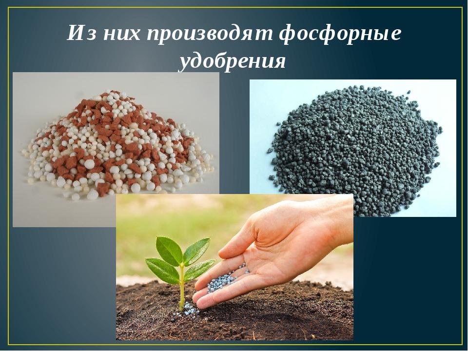 Из них производят фосфорные удобрения