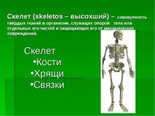 Скелет (skeletos – высохший) – совокупность твёрдых тканей в организме, служа