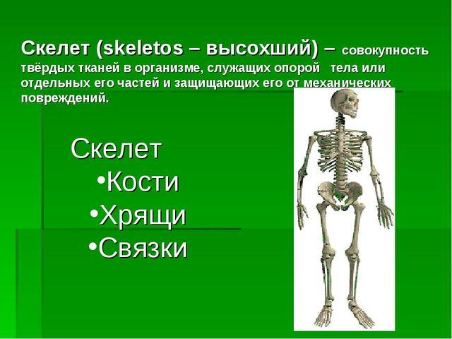 Скелет (skeletos – высохший) – совокупность твёрдых тканей в организме, служа...