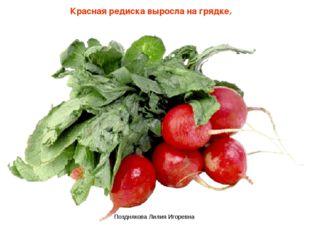 Красная редиска выросла на грядке, Позднякова Лилия Игоревна Позднякова Лилия