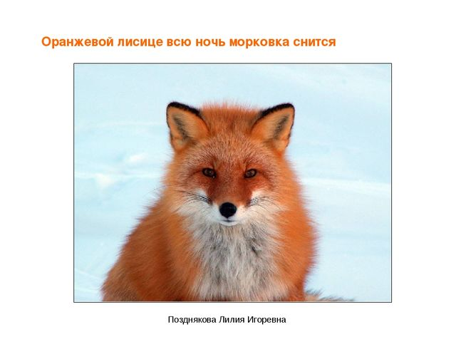 Оранжевой лисице всю ночь морковка снится Позднякова Лилия Игоревна Поздняков...