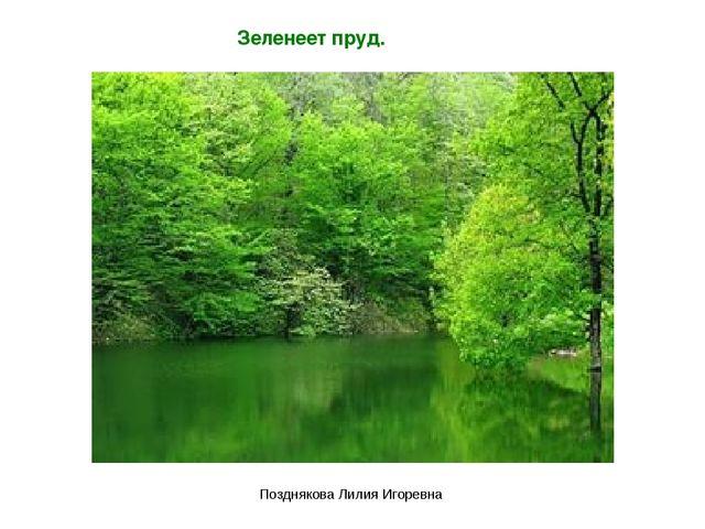Зеленеет пруд. Позднякова Лилия Игоревна Позднякова Лилия Игоревна
