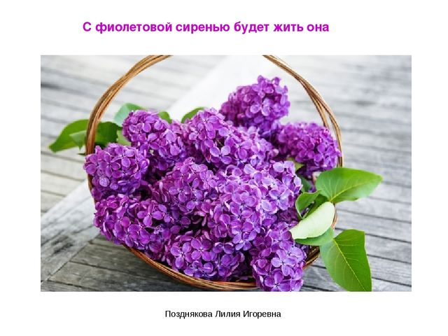 С фиолетовой сиренью будет жить она Позднякова Лилия Игоревна Позднякова Лили...