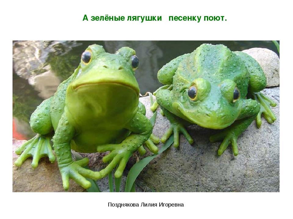 А зелёные лягушки песенку поют. Позднякова Лилия Игоревна Позднякова Лилия Иг...