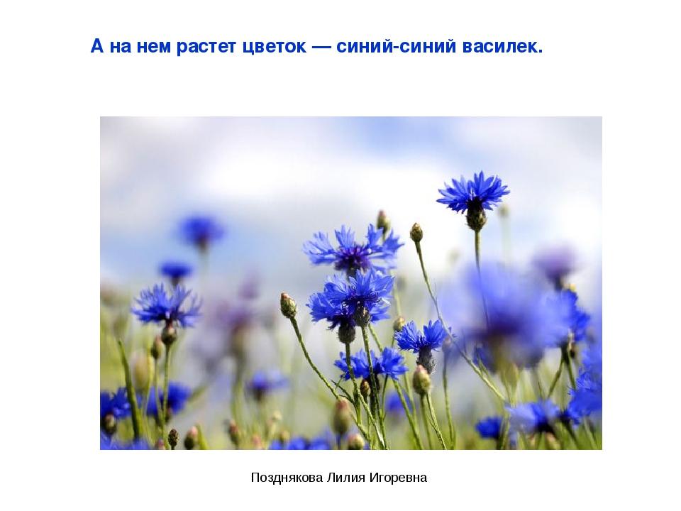 А на нем растет цветок — синий-синий василек. Позднякова Лилия Игоревна Поздн...