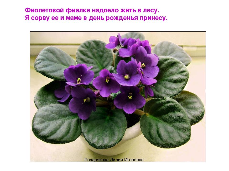 Фиолетовой фиалке надоело жить в лесу. Я сорву ее и маме в день рожденья прин...