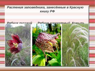 Растения заповедника, занесённые в Красную книгу РФ Рябчик русский Рябчик шах