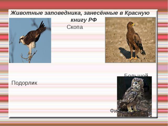 Животные заповедника, занесённые в Красную книгу РФ Скопа Большой Подорлик Фи...