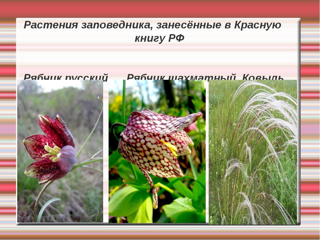 Растения заповедника, занесённые в Красную книгу РФ Рябчик русский Рябчик шах...