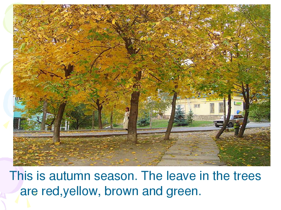 This is autumn season. The leave in the trees are red,yellow, brown and green.
