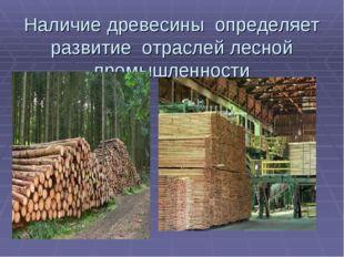Наличие древесины определяет развитие отраслей лесной промышленности