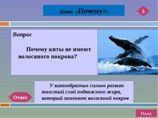 Ответ Назад 6 Лавка «Почему?» Вопрос Почему млекопитающие являются наиболее