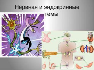 Нервная и эндокринные системы