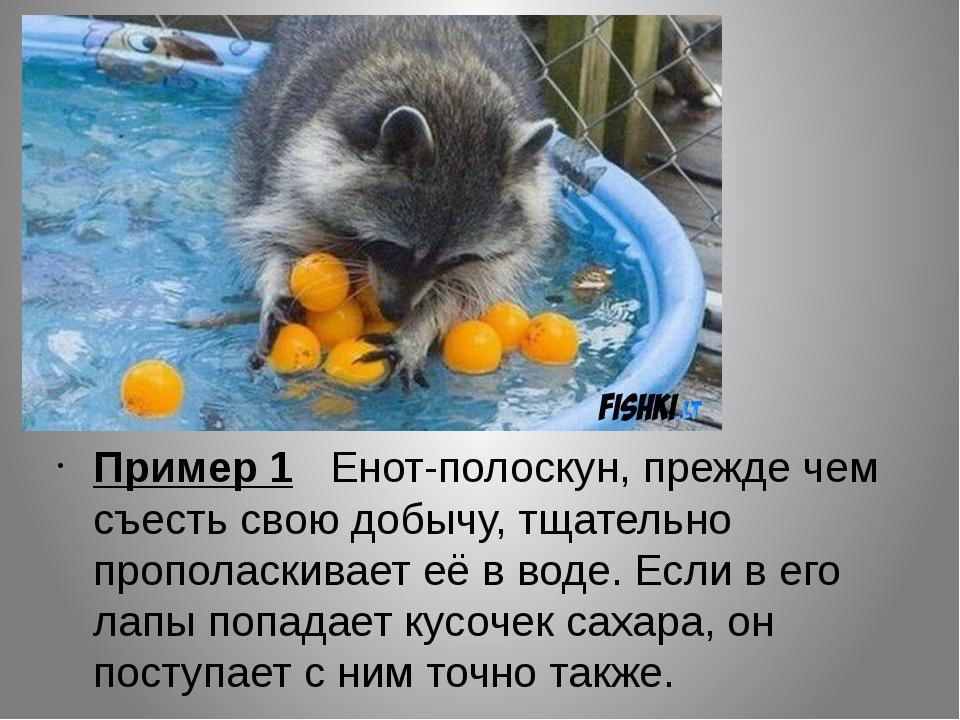 Пример 1 Енот-полоскун, прежде чем съесть свою добычу, тщательно прополаскив...