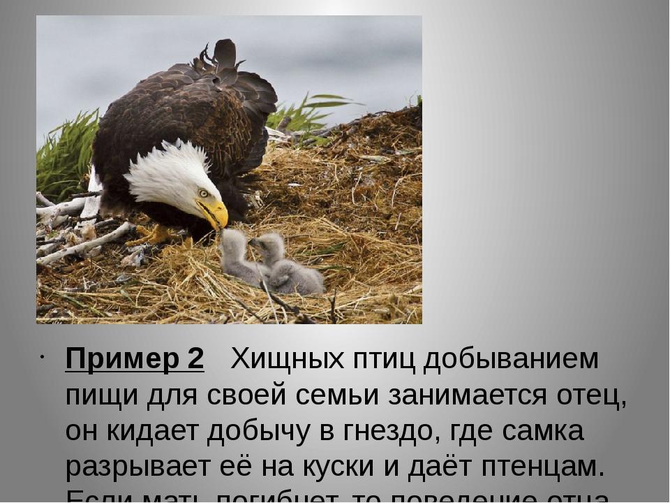 Пример 2 Хищных птиц добыванием пищи для своей семьи занимается отец, он кид...