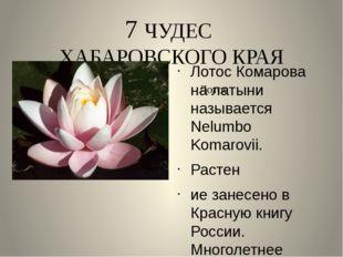 7 ЧУДЕС ХАБАРОВСКОГО КРАЯ Лотос Комарова на латыни называется Nelumbo Komarov