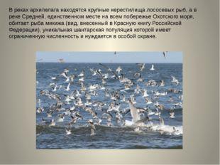 В реках архипелага находятся крупные нерестилища лососевых рыб, а в реке Сред
