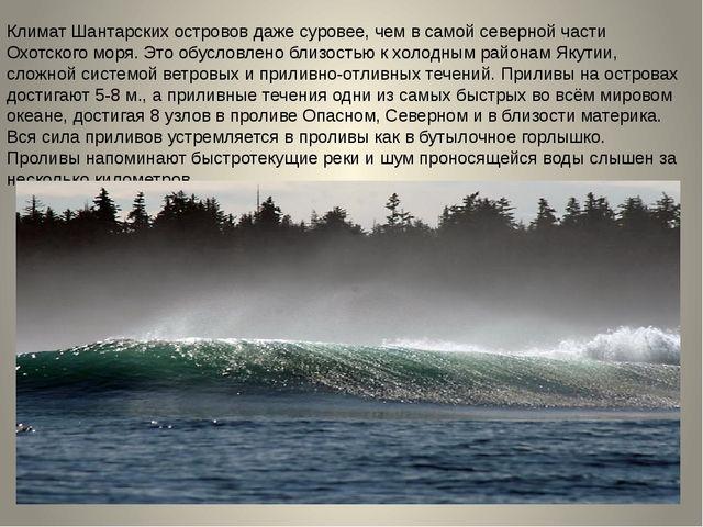 Климат Шантарских островов даже суровее, чем в самой северной части Охотского...