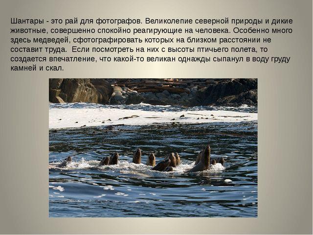 Шантары - это рай для фотографов. Великолепие северной природы и дикие живот...