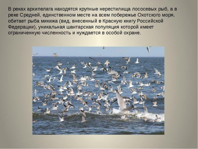 В реках архипелага находятся крупные нерестилища лососевых рыб, а в реке Сред...