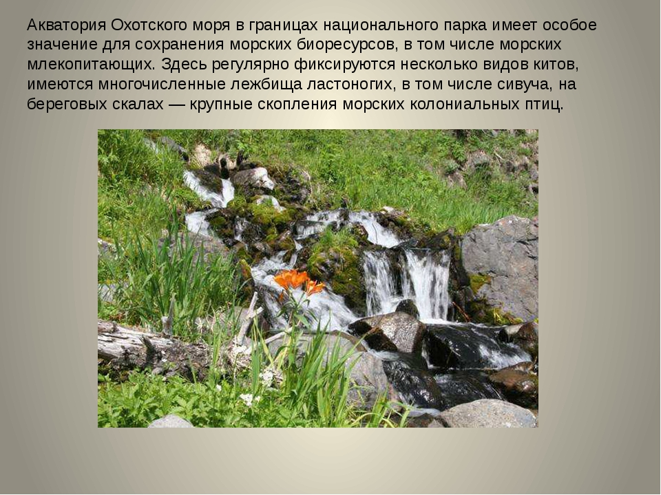 Акватория Охотского моря в границах национального парка имеет особое значение...