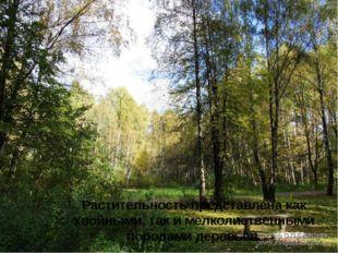 Растительность представлена как хвойными, так и мелколиственными породами де
