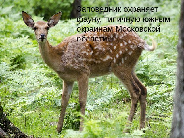 Заповедник охраняет фауну, типичную южным окраинам Московской области.