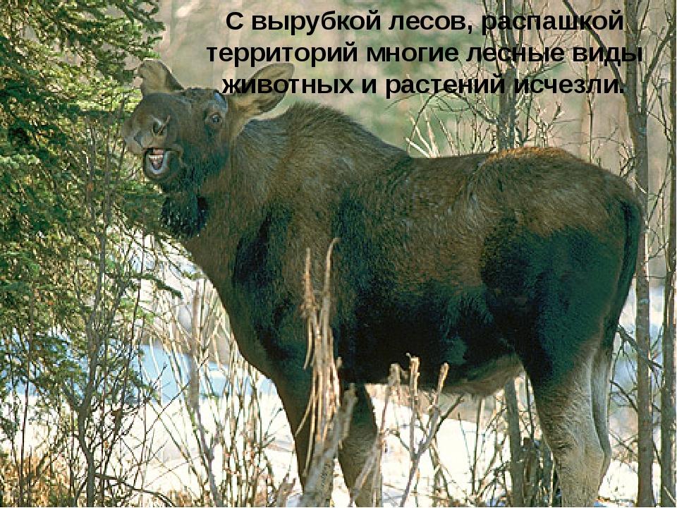 С вырубкой лесов, распашкой территорий многие лесные виды животных и растени...