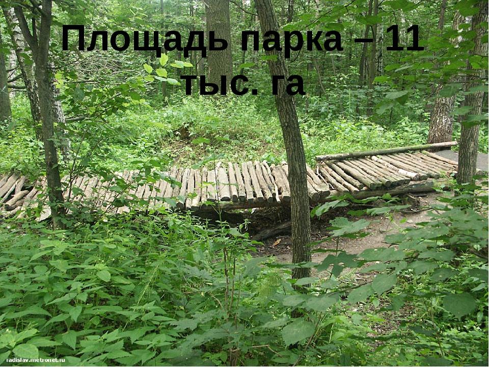 Площадь парка – 11 тыс. га
