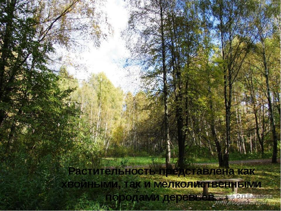 Растительность представлена как хвойными, так и мелколиственными породами де...
