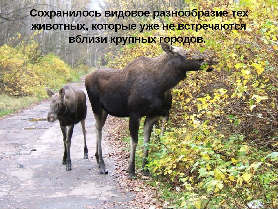 Сохранилось видовое разнообразие тех животных, которые уже не встречаются вб...