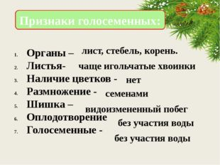 Органы – Листья- Наличие цветков - Размножение - Шишка – Оплодотворение Голос
