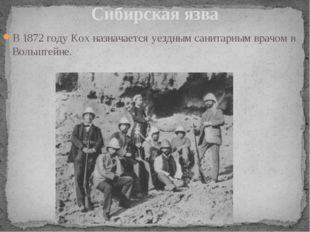 В 1872 году Кох назначается уездным санитарным врачом в Вольштейне. Сибирская