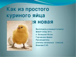 Как из простого куриного яйца получается новая жизнь Выполнила ученица 3 клас