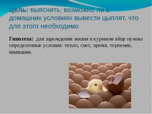 Цель: выяснить, возможно ли в домашних условиях вывести цыплят, что для этого