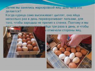 Затем мы занялись маркировкой яиц. Для чего это делается? Когда курица сама в