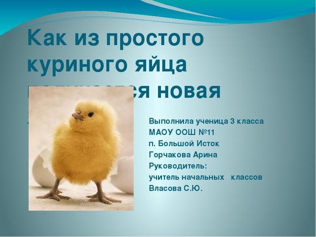 Как из простого куриного яйца получается новая жизнь Выполнила ученица 3 клас...