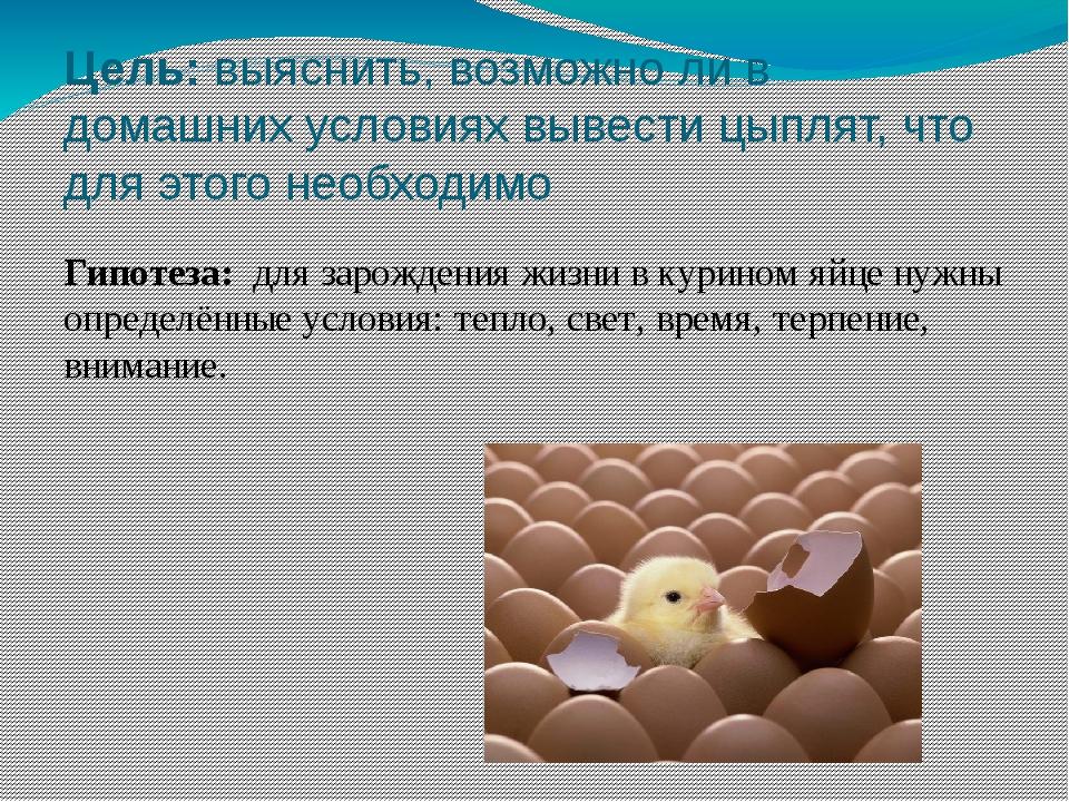 Цель: выяснить, возможно ли в домашних условиях вывести цыплят, что для этого...