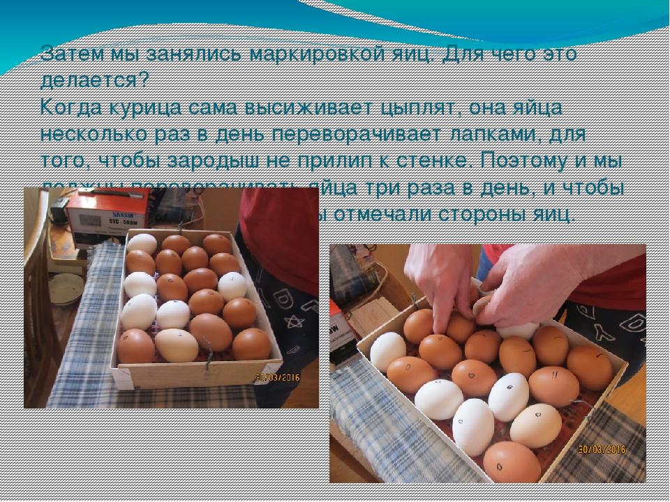 Затем мы занялись маркировкой яиц. Для чего это делается? Когда курица сама в...